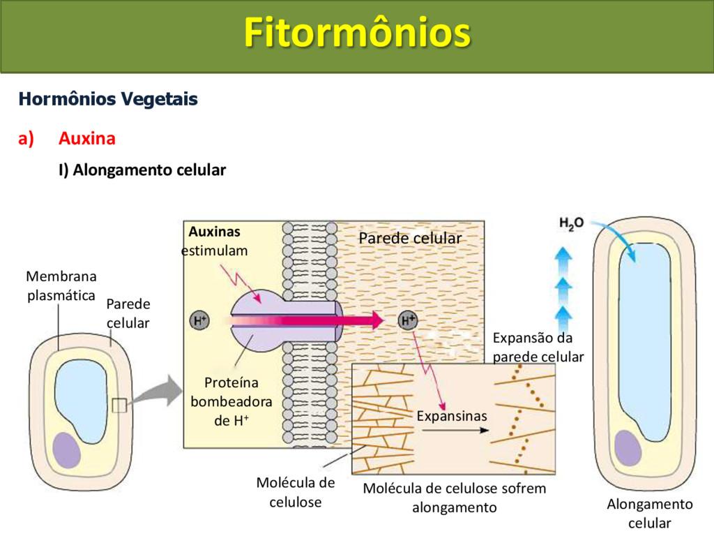 Hormônios Vegetais a) Auxina I) Alongamento cel...