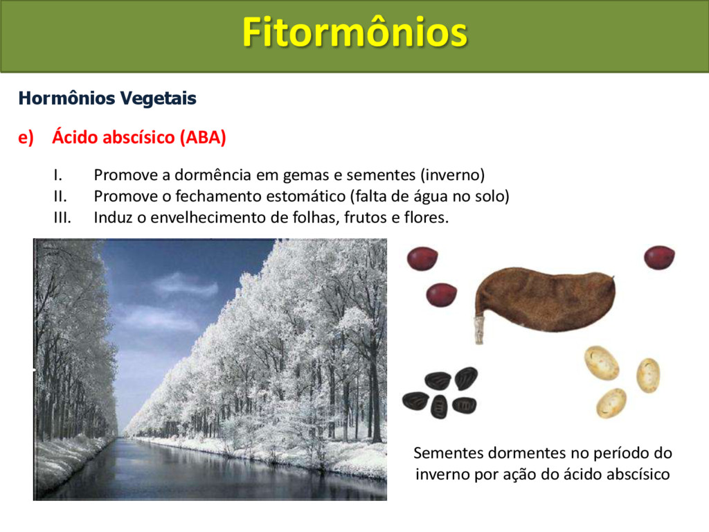Hormônios Vegetais e) Ácido abscísico (ABA) I. ...