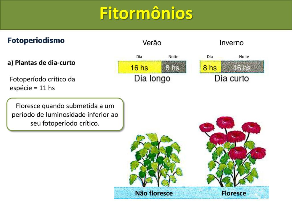 Fotoperiodismo a) Plantas de dia-curto Fotoperí...