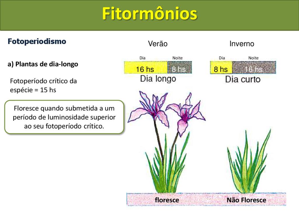 Fotoperiodismo a) Plantas de dia-longo Fotoperí...