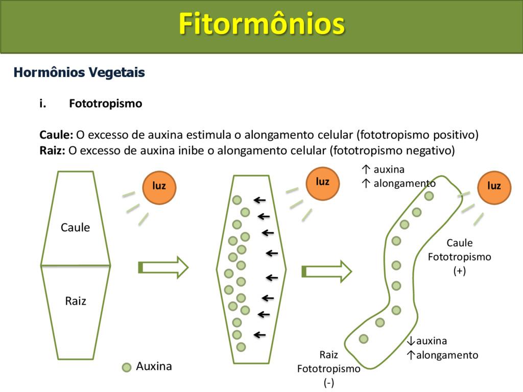 Hormônios Vegetais i. Fototropismo Caule: O exc...