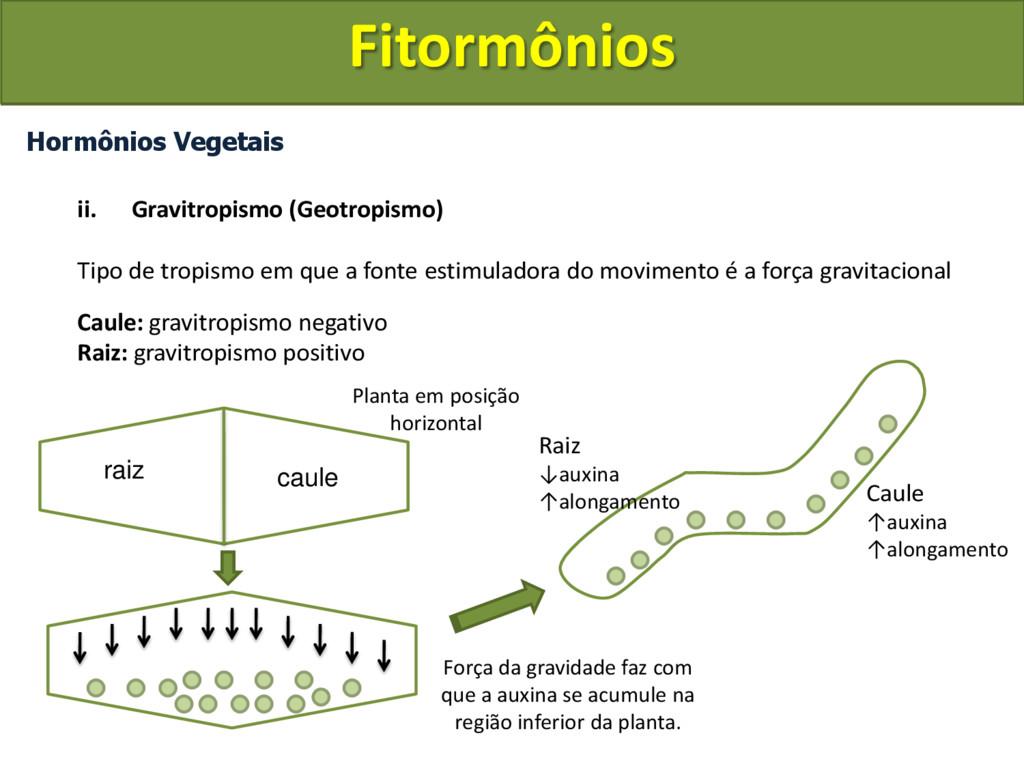 Hormônios Vegetais ii. Gravitropismo (Geotropis...