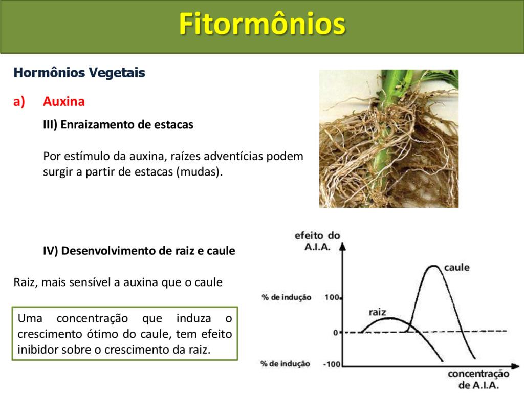 Hormônios Vegetais a) Auxina III) Enraizamento ...