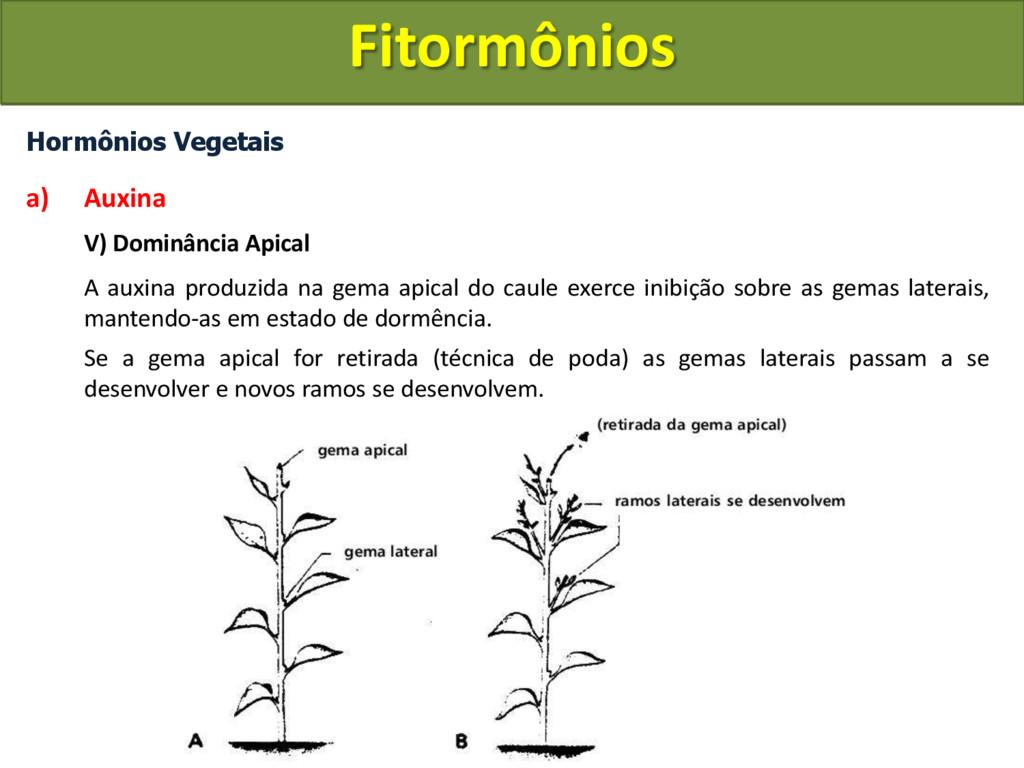 Hormônios Vegetais a) Auxina V) Dominância Apic...