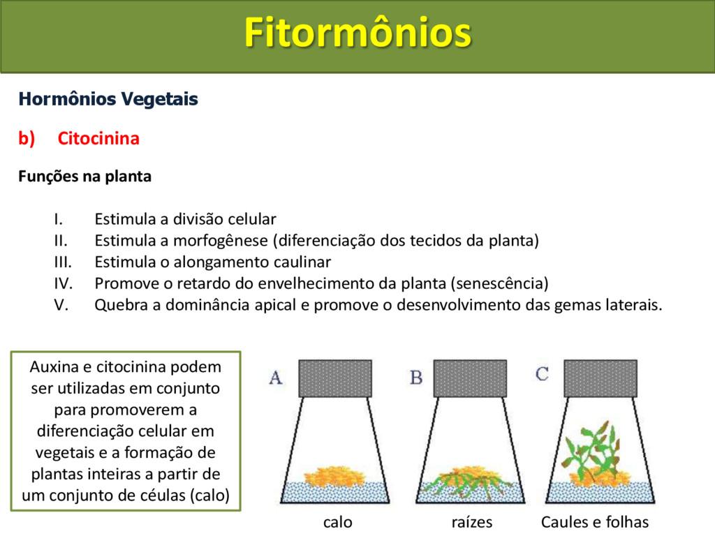 Hormônios Vegetais b) Citocinina Funções na pla...