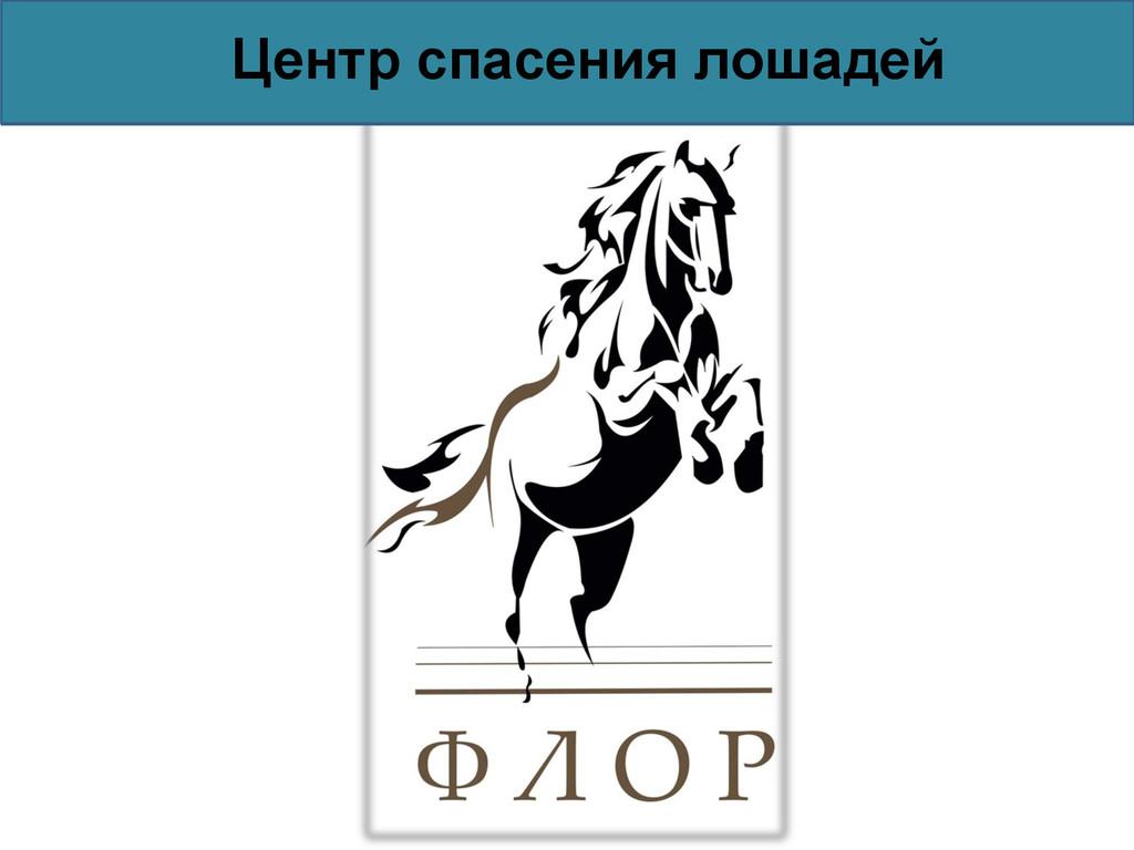 Центр спасения лошадей