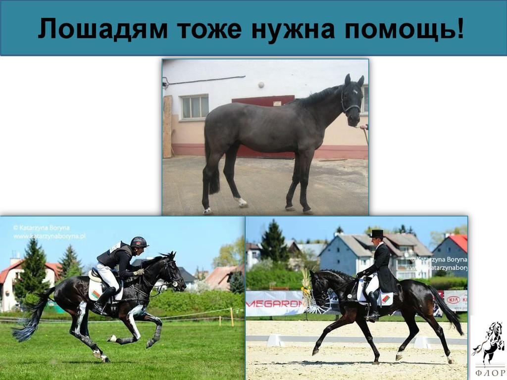 Лошадям тоже нужна помощь!