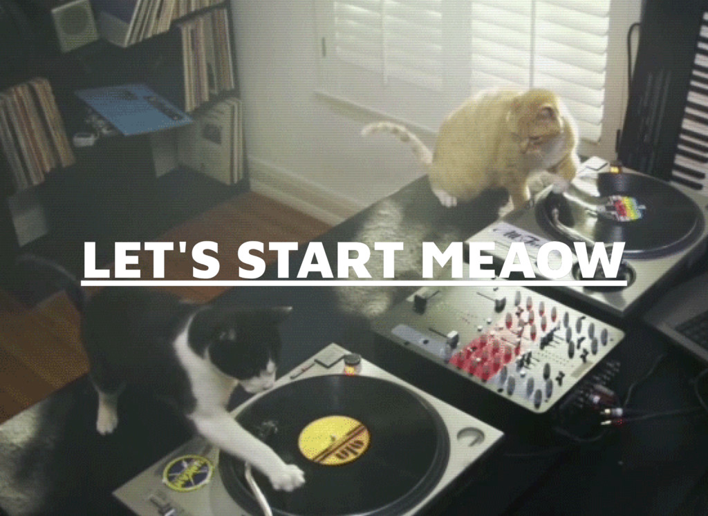 LET'S START MEAOW LET'S START MEAOW