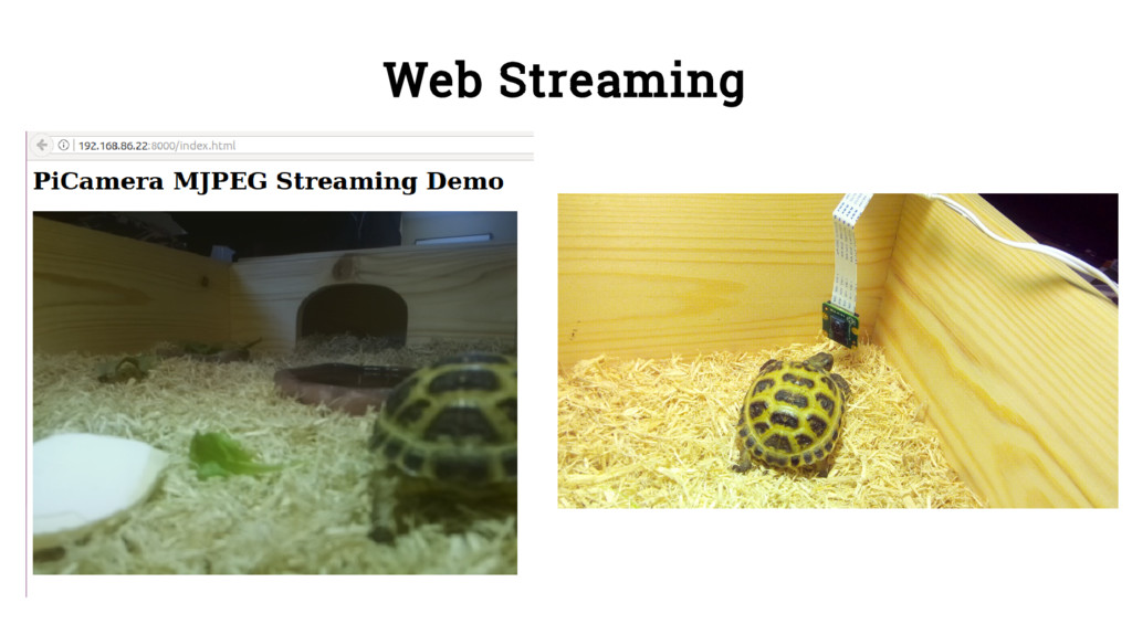 Web Streaming