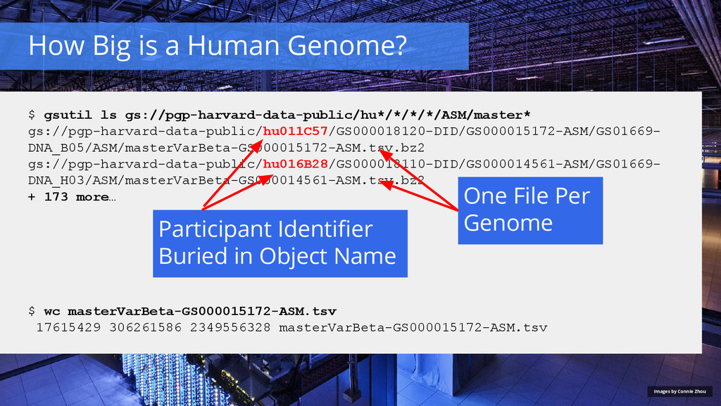 How Big is a Human Genome? Images by Connie Zho...
