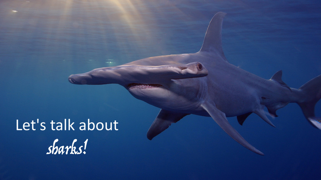 Let's talk about sharks!