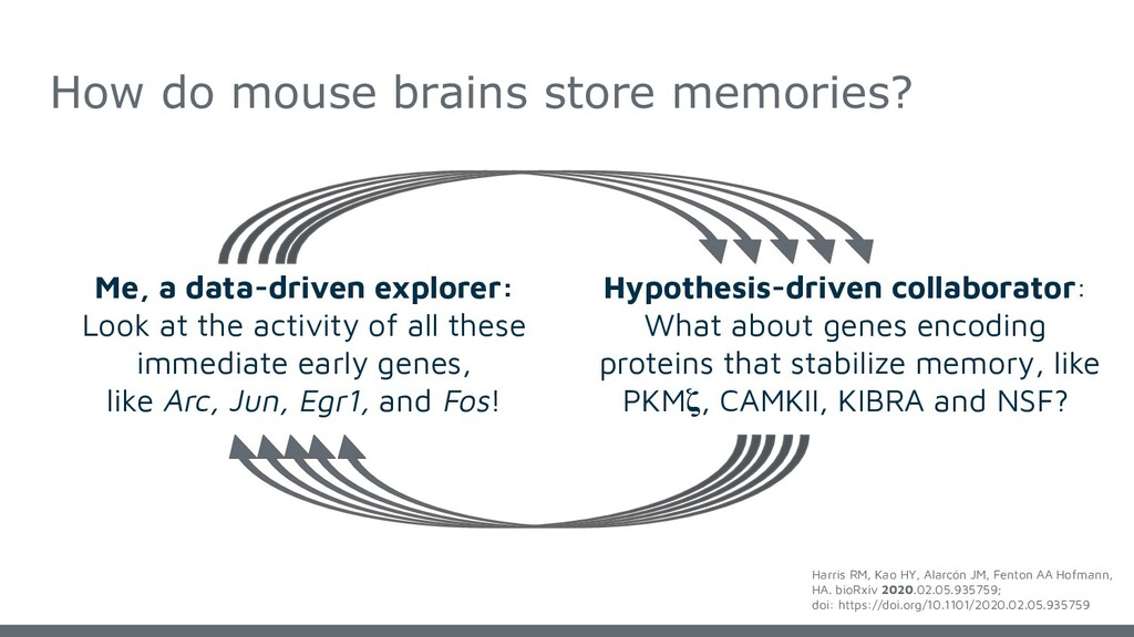 How do mouse brains store memories? Me, a data-...