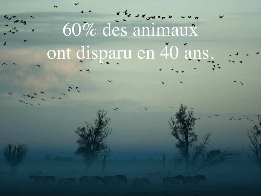60% des animaux ont disparu en 40 ans.