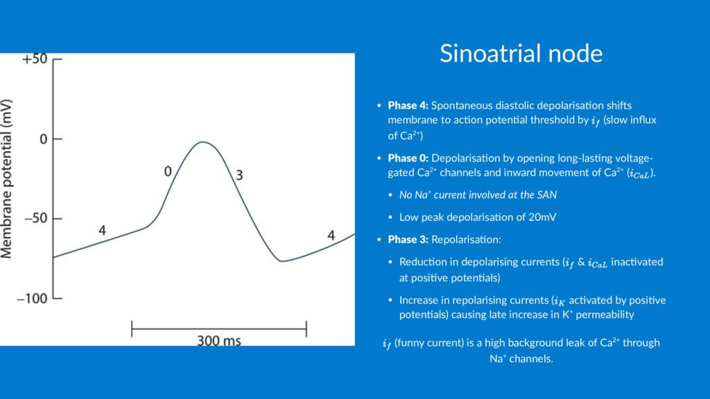 Sinoatrial node • Phase 4: Spontaneous diastoli...