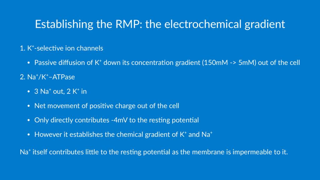 Establishing the RMP: the electrochemical gradi...