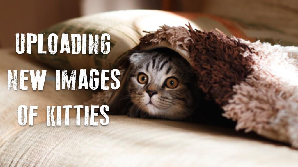 UPLOADING NEW IMAGES OF KITTIES