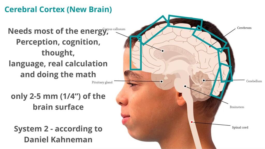 Cerebral Cortex (New Brain) Needs most of the e...