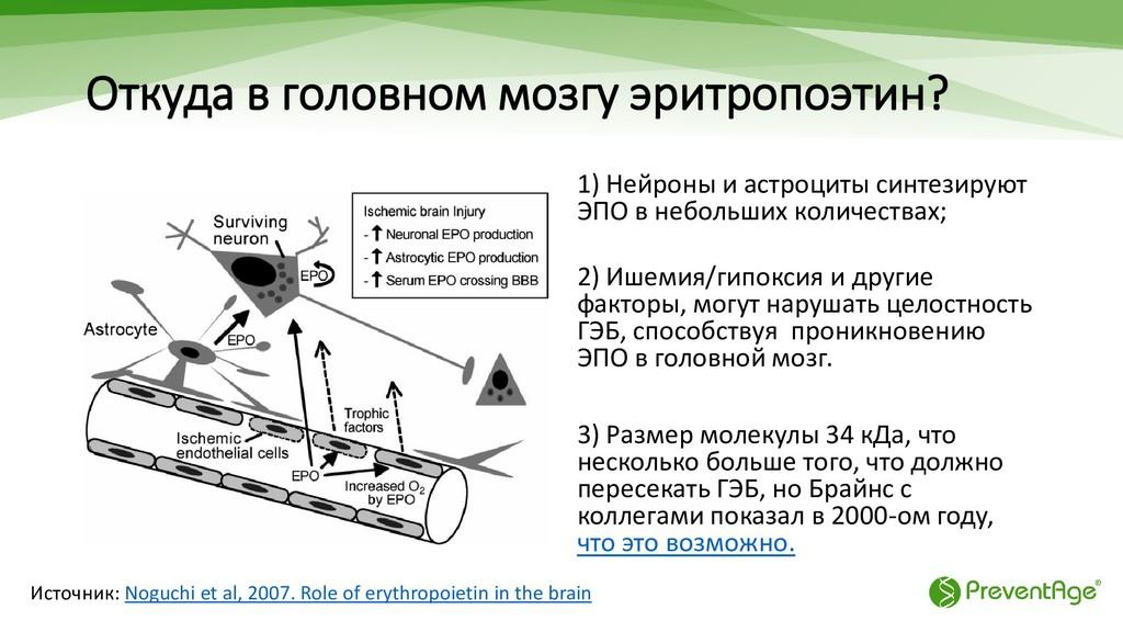 Откуда в головном мозгу эритропоэтин? 1) Нейрон...