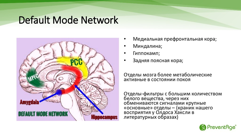 Default Mode Network • Медиальная префронтальна...