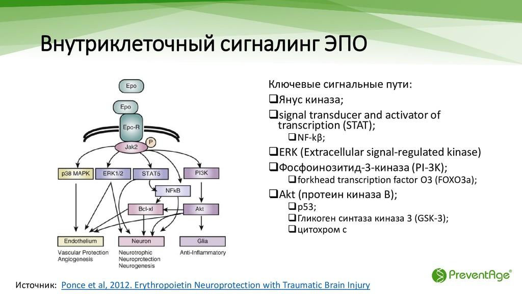 Внутриклеточный сигналинг ЭПО Ключевые сигнальн...