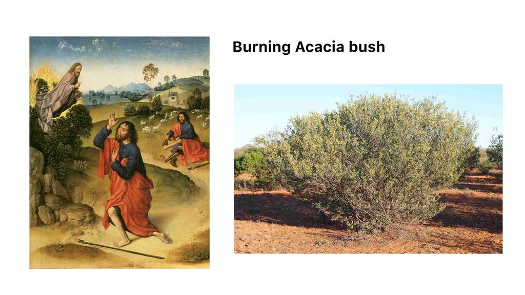 Burning Acacia bush