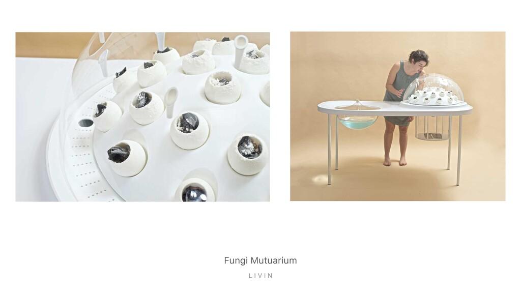 Fungi Mutuarium L I V I N