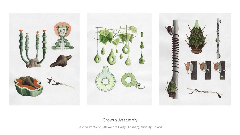Growth Assembly Sascha Pohflepp, Alexandra Dais...