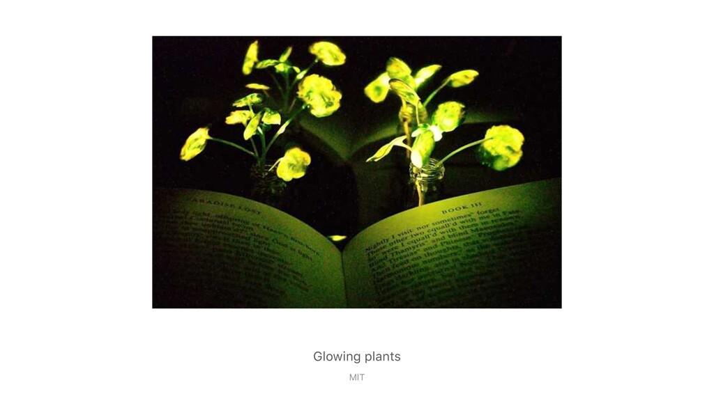 Glowing plants MIT