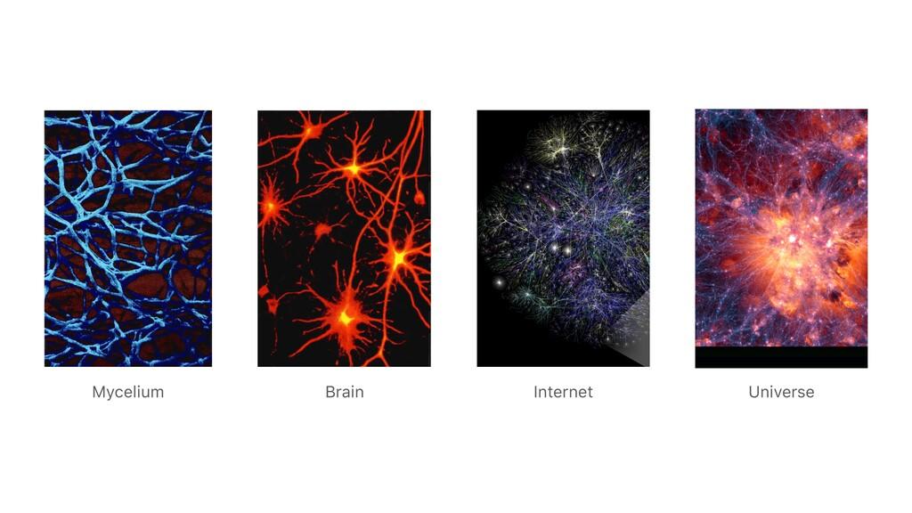 Mycelium Brain Internet Universe