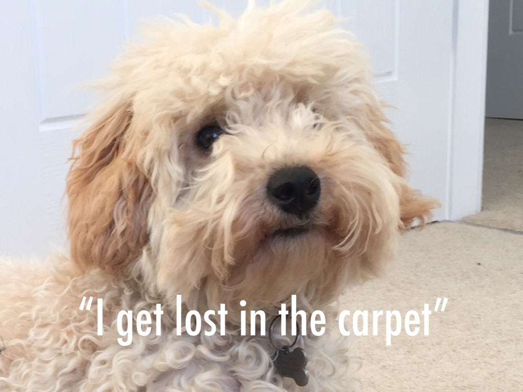"""I get lost in the carpet"""