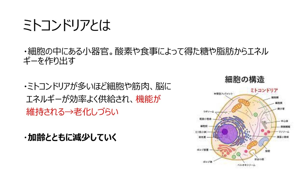ミトコンドリアとは ・細胞の中にある小器官。酸素や食事によって得た糖や脂肪からエネル ギーを作...