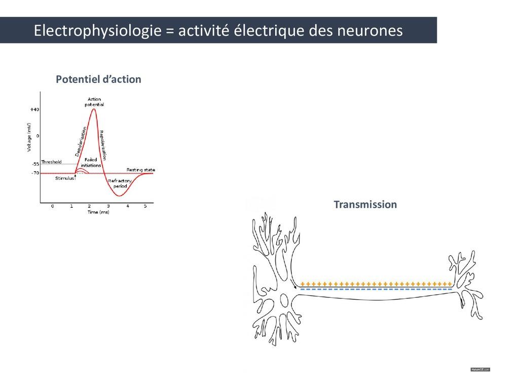 Electrophysiologie = activité électrique des ne...