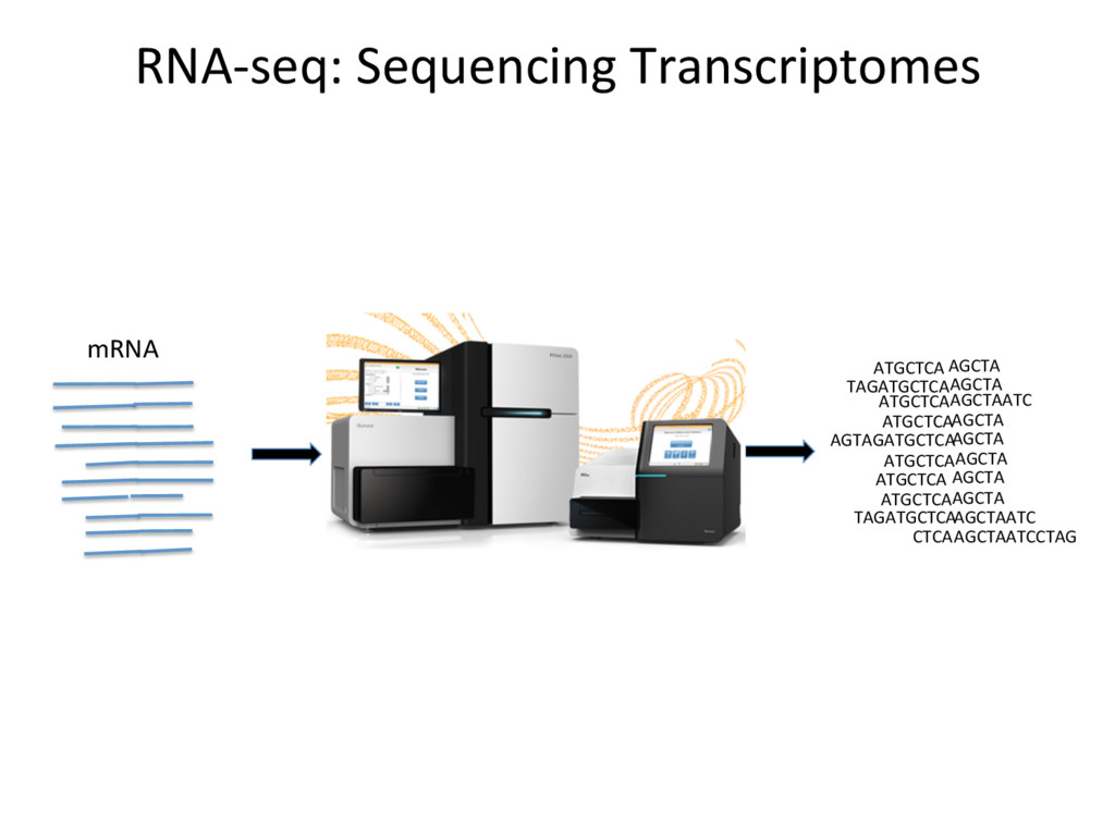 RNA-seq: Sequencing Transcriptomes ATGCTCA AGCT...