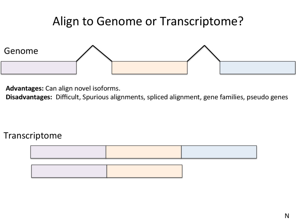 Align to Genome or Transcriptome? Genome Transc...