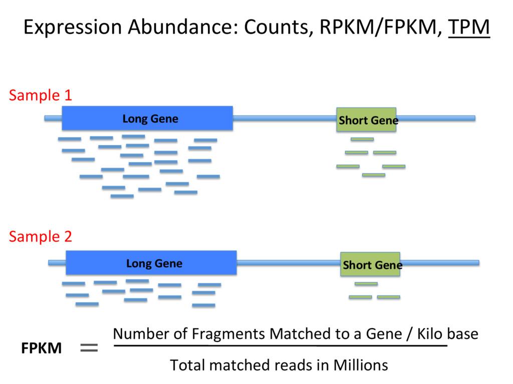 Expression Abundance: Counts, RPKM/FPKM, TPM Lo...