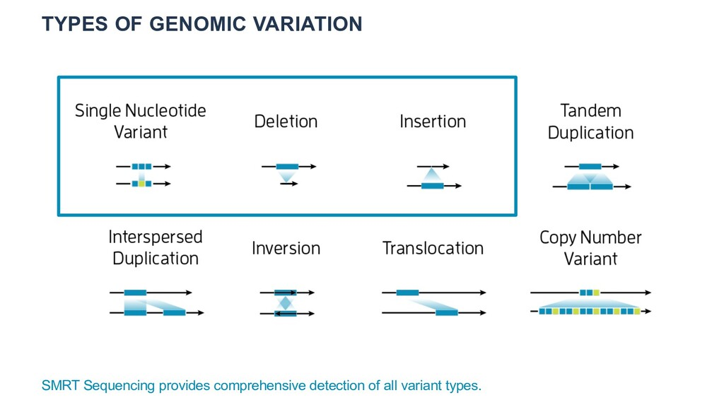 TYPES OF GENOMIC VARIATION SMRT Sequencing prov...