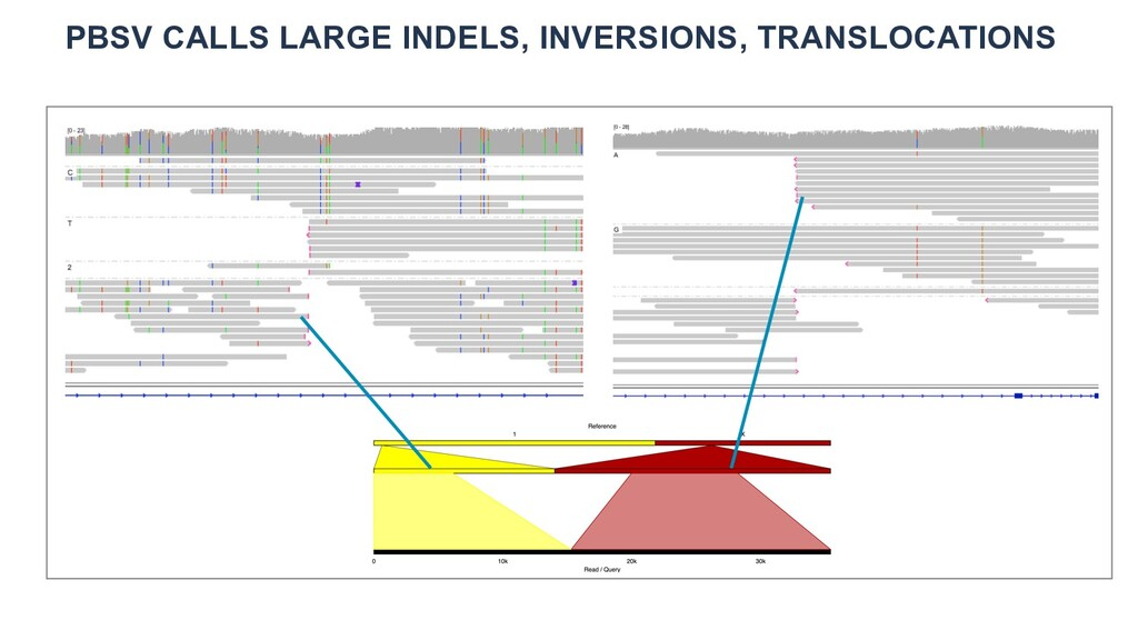 PBSV CALLS LARGE INDELS, INVERSIONS, TRANSLOCAT...