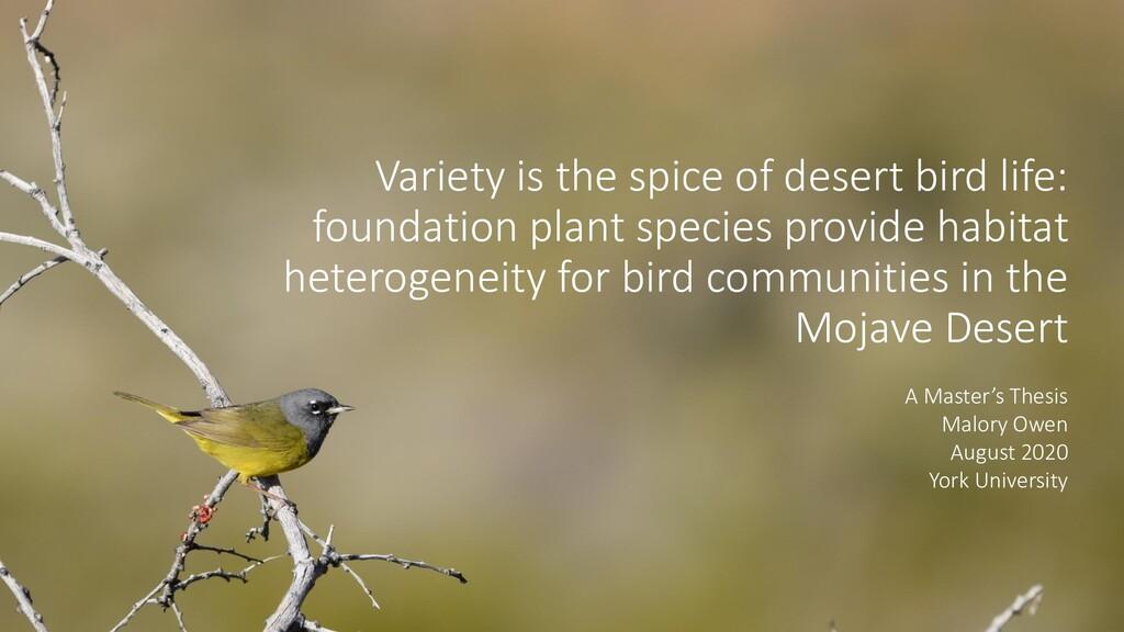 Variety is the spice of desert bird life: found...