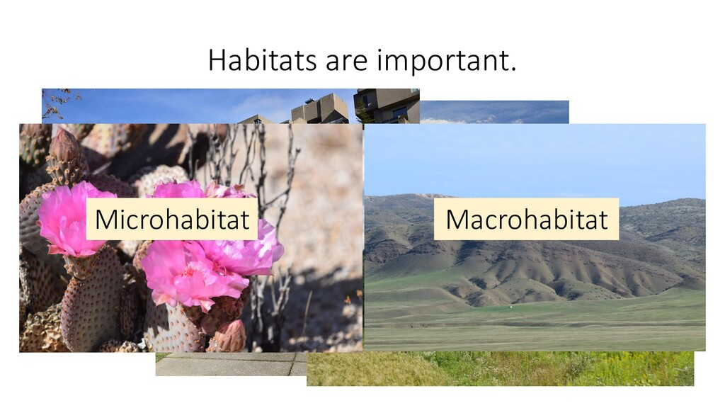 Habitats are important. Microhabitat Macrohabit...