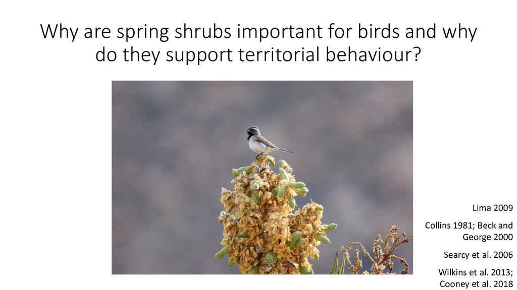 Why are spring shrubs important for birds and w...