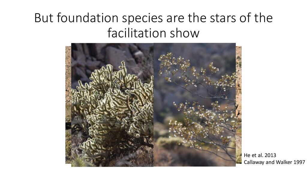 But foundation species are the stars of the fac...