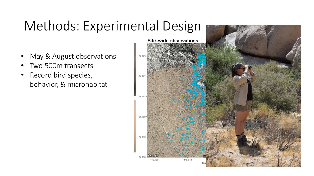 • May & August observations • Two 500m transect...
