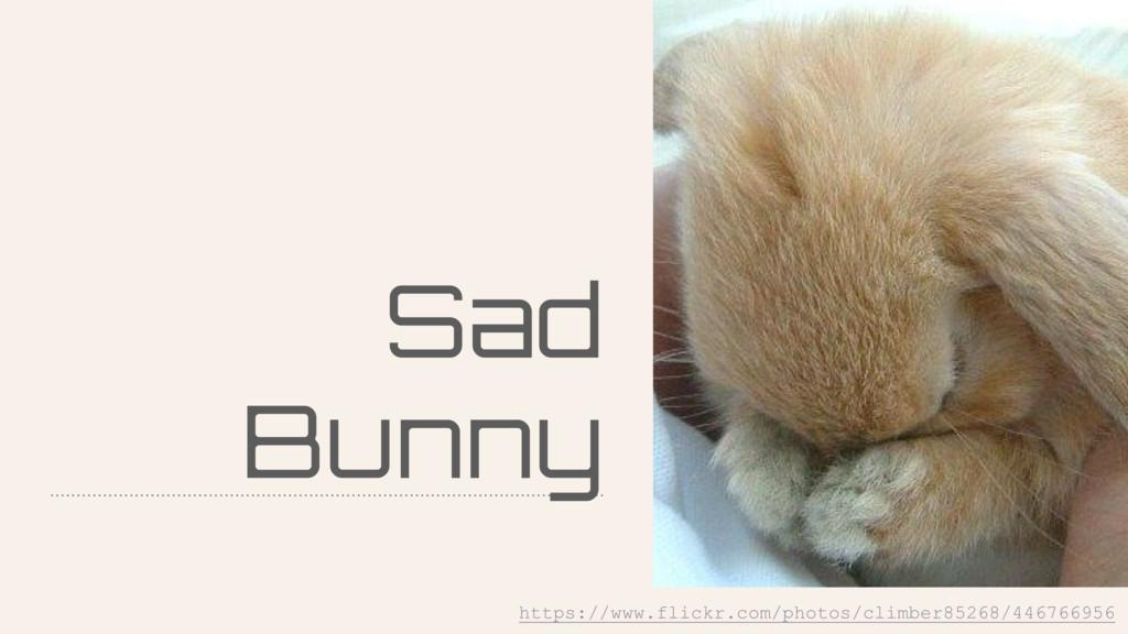 Sad Bunny https://www.flickr.com/photos/climber...