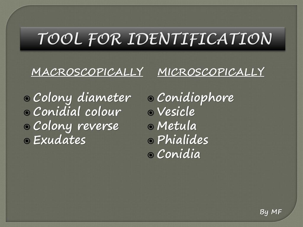 MACROSCOPICALLY  Colony diameter  Conidial co...