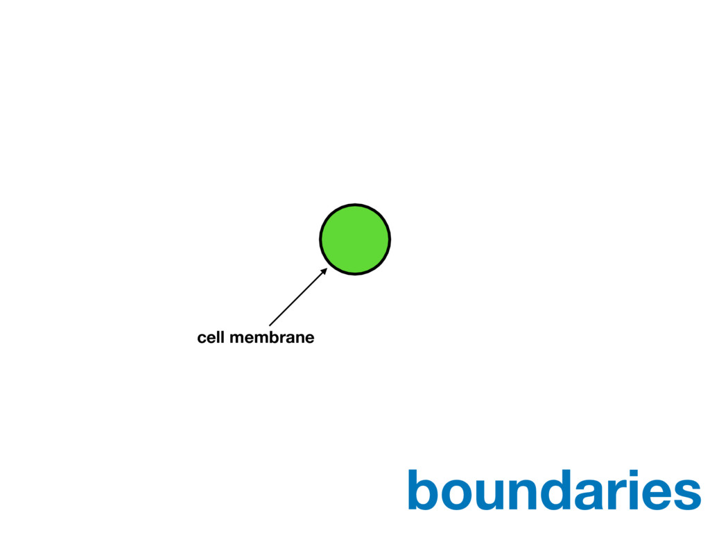 cell membrane boundaries