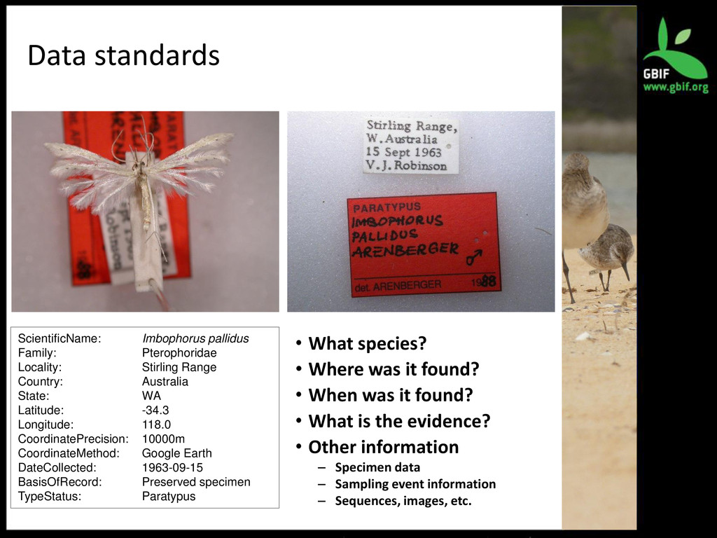 Data standards ScientificName: Imbophorus palli...