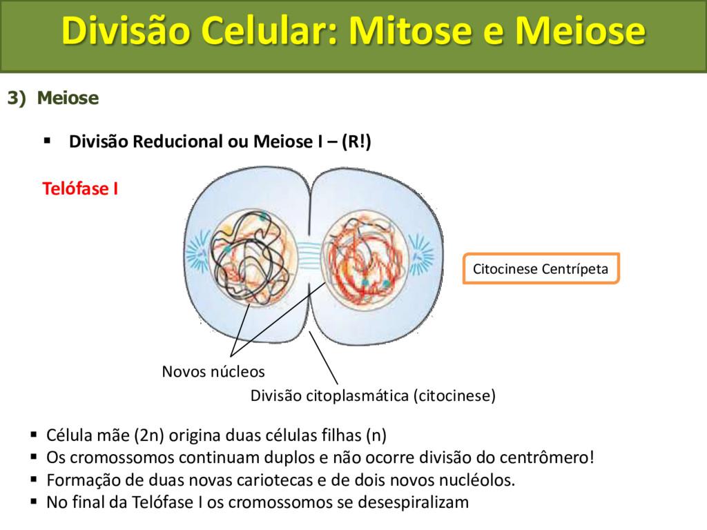 3) Meiose  Divisão Reducional ou Meiose I – (R...