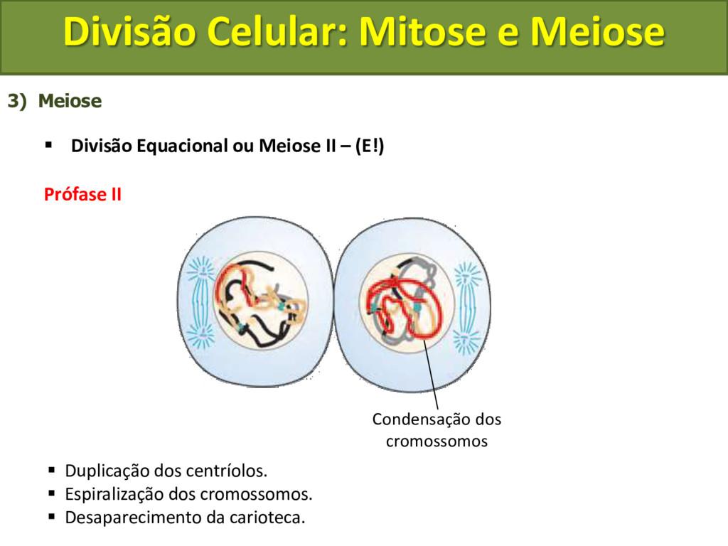 3) Meiose  Divisão Equacional ou Meiose II – (...