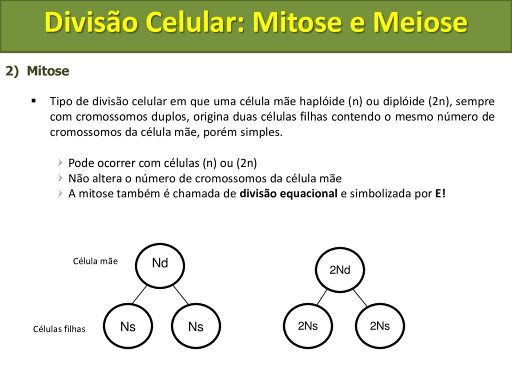 2) Mitose  Tipo de divisão celular em que uma ...