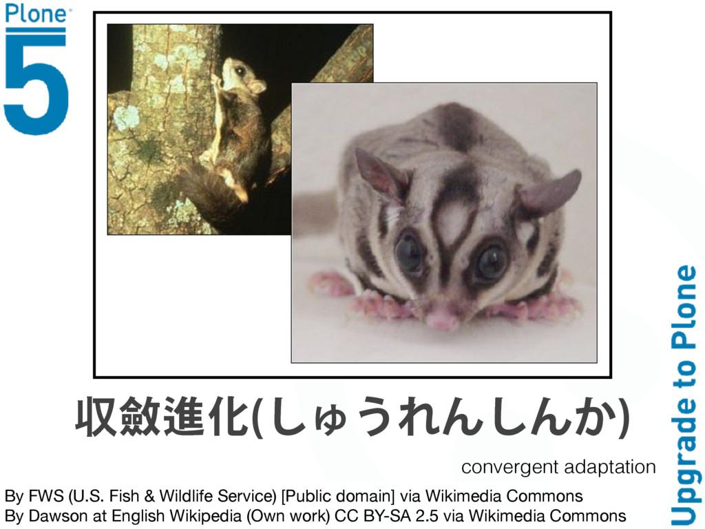 By FWS (U.S. Fish & Wildlife Service) [Public d...